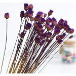 WOOAI - 50 steli di fiori secchi, fiori felici, piante naturali, bouquet decorativo floreale, decorazione per la casa, matrimoni, feste, feste, colore: viola